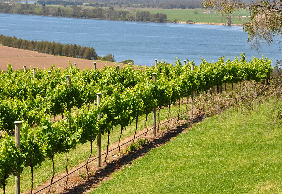 Luxe South Coast Tours | Two Fig Winery